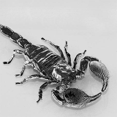 scorpione4